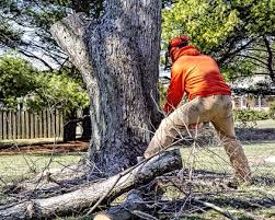 tree lopper cutting down a tree with a chainsaw